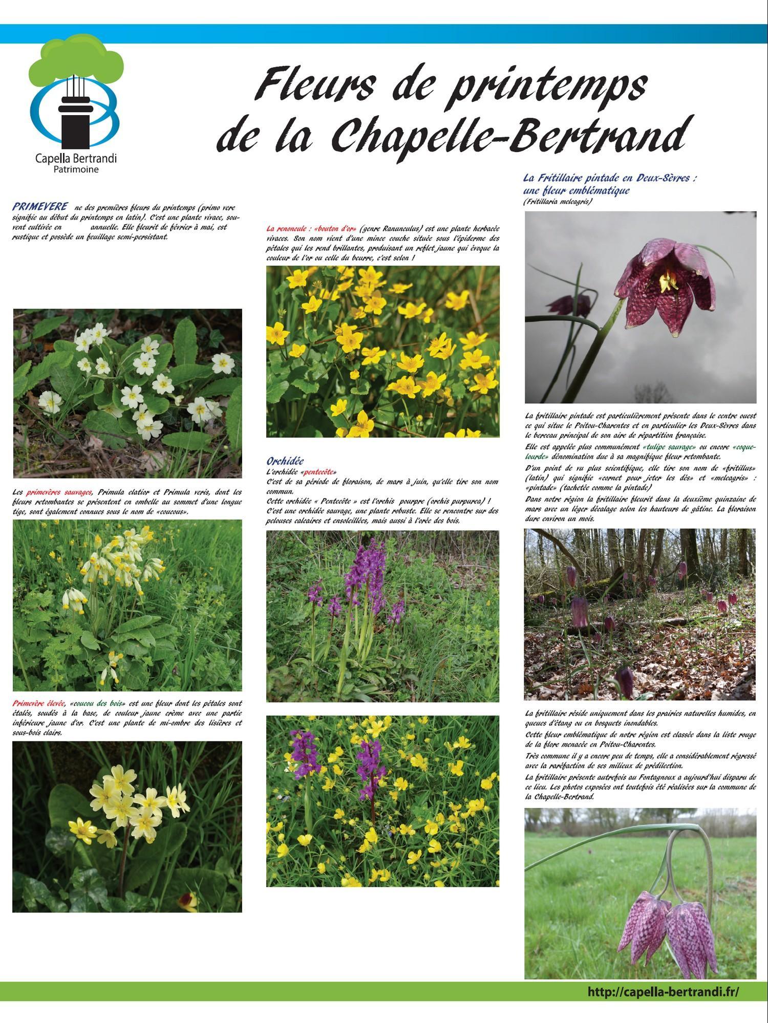 Les fleurs de printemps - Capella Bertrandi