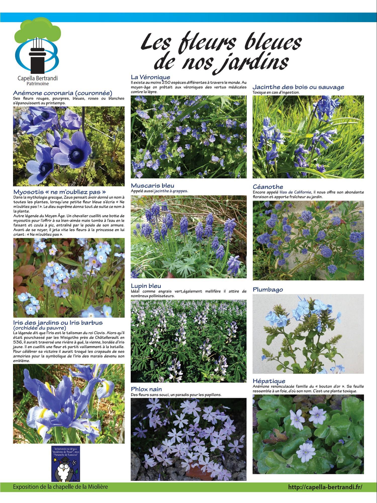 """Panneau exposition """"Les fleurs bleues"""" - Capella Bertrandi"""